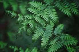 close up photography of fern leaves